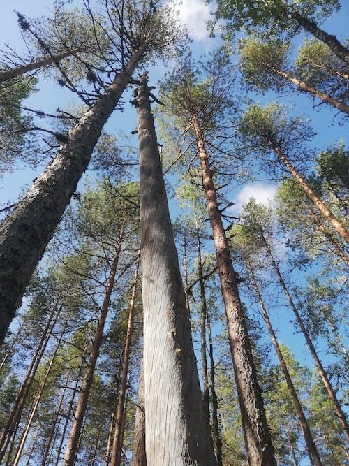Karkausmäen kammari Tahtoo luontoon - 4 vrk majoituspaketti Kinnula